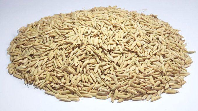 شلتوک برنج قرمز